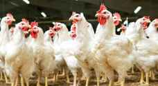 Jordan cracks down on soaring chicken cost: consumers to boycott poultry if price-cap fails
