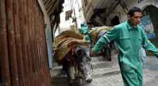 Donkeys have a rubbish job in Algeria's historic Kasbah city