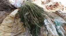 Man arrested for cultivating marijuana in Amman