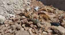 Dozens of cats poisoned to death in Jordanian village