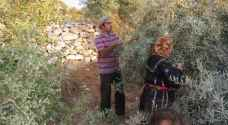 Israeli settlers attack Palestinian olive harvesters