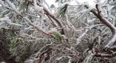 Low temperatures across the Kingdom, frost hits southern areas