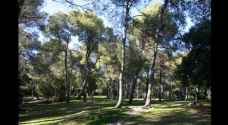 GAM is making Amman green again