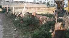 Tree massacre in Gardens for building purposes