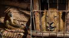 40 animals to be rescued from Gaza zoo to Jordan