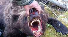 Bear attacks tourist group in Russia, eats teenager