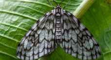 Colombian photographer documents world's largest variety of butterflies