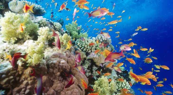 Losing coral reefs is not only bad news for tourists diving to see their beauty and marine life swimming among them.