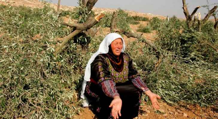 Israeli settlers set olive trees on fire