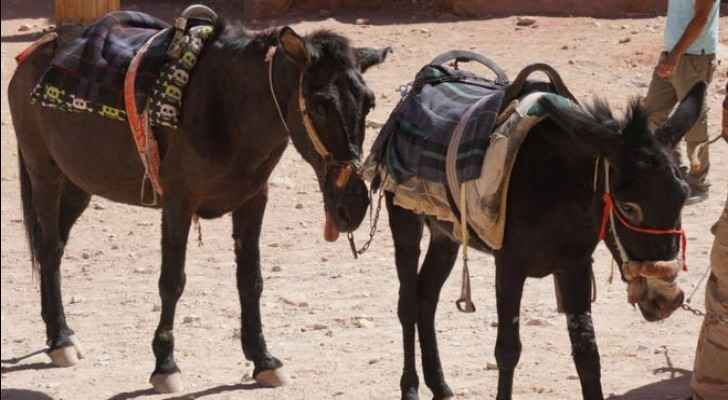 From: Peta, who says the donkey on the left has a tongue sticking out due to a neurological disorder.