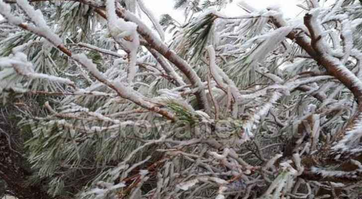 Frost formed in Tafila as temperatures dropped during the weekend.