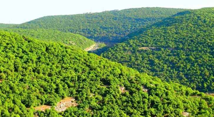 Ajloun Governorate is famous for its thick forests and beautiful nature. (Jordan Times)
