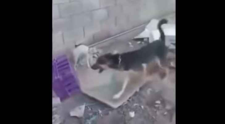 The dog eventually bit into the poor cat's neck. (YouTube)