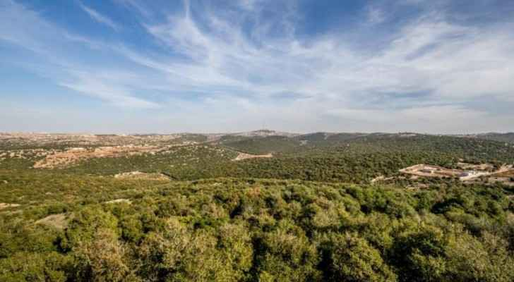 Ajloun forest.