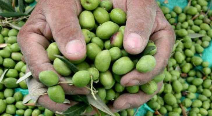 Israel biggest importer of Jordanian olives