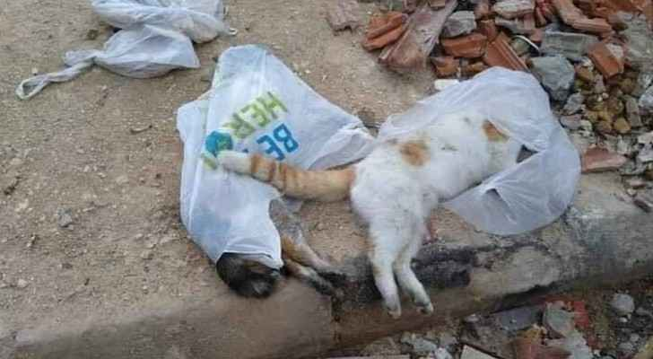 The cats died after eating contaminated sardines. (Roya)