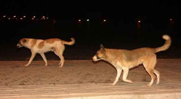 GAM: Campaign to reduce numbers of stray dogs in Amman