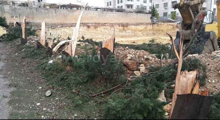 Tree massacre in Gardens for building purposes