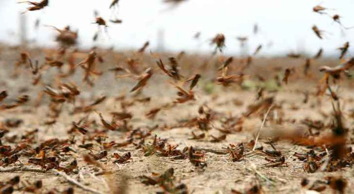 Government meeting with army and security services in preparation for potential locust invasion