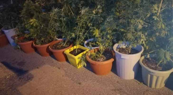 Three people arrested after using house to plant marijuana in Tabarbour