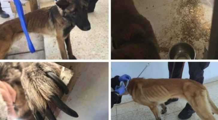 U.S. bomb-sniffing dogs sent to Jordan dying due to poor treatment