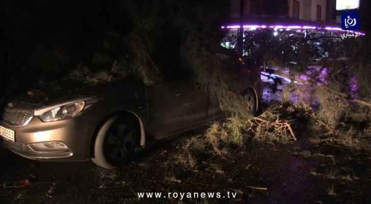 Watch tree falls on car in Irbid due to strong winds