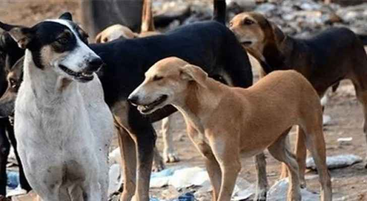 Angry reactions after video of pet dogs being killed in Jerash went viral