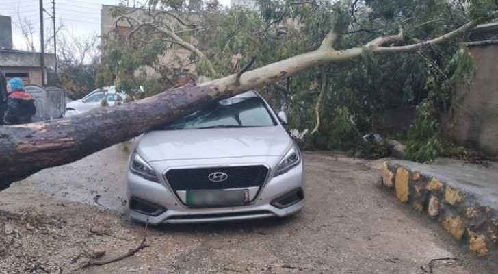 Tree falls on car in Amman due to strong winds