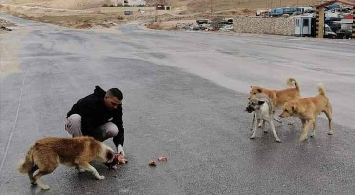 GAM launches campaign to feed stray dogs in eastern Amman