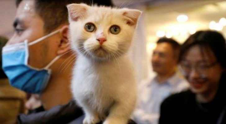 Vietnam hosts its first ever cat show gathering 60 pedigree cats