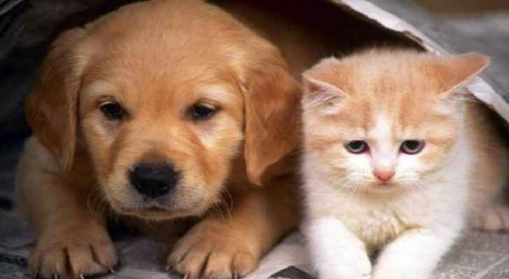 Municipalities directed to contact pet owners to keep their pets inside