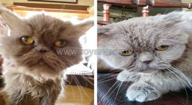 Jordanian woman files legal case over treatment of cats