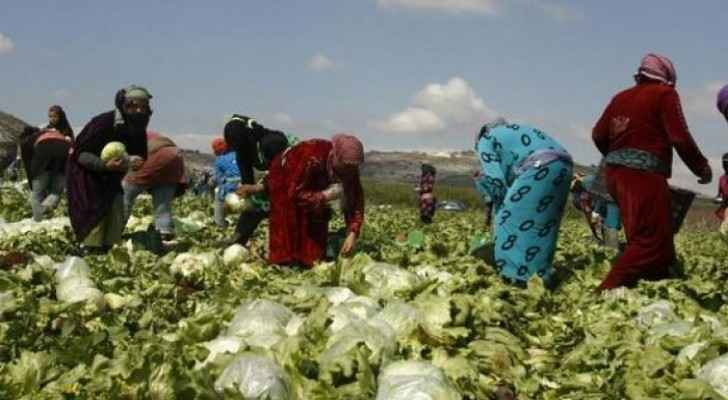 Jordanians unable to compete with expatriate agricultural workers, says Minister of Labour