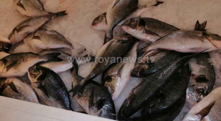Seafood restaurant closed, 200 kg of fish disposed in Irbid