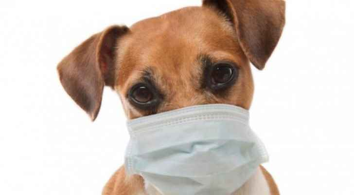 Dog tests positive for COVID-19 in Irbid
