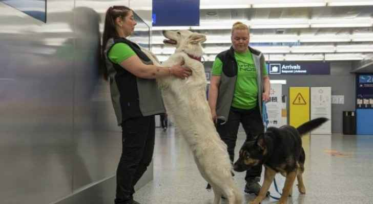 Dog training to detect COVID-19 at Helsinki airport