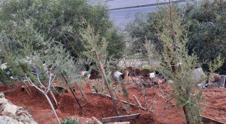 Jordan produces two million trees annually to increase green footprint: Agriculture Minister