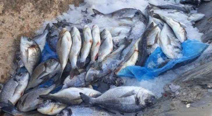 JFDA seizes 42 tons of expired fish, marine products