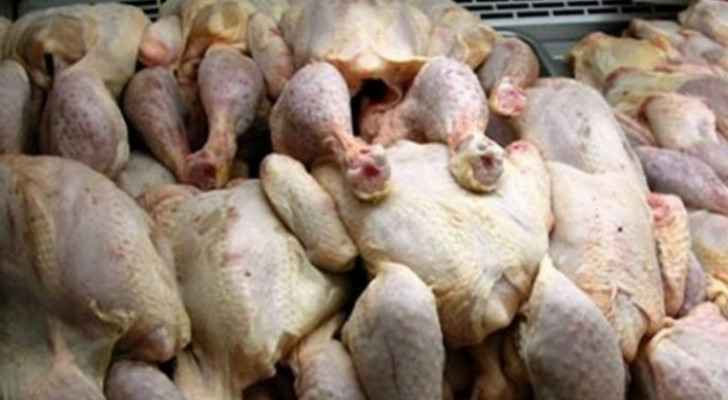 Health inspectors destroy 1.5 tons of unlawfully slaughtered chicken in Russeifa
