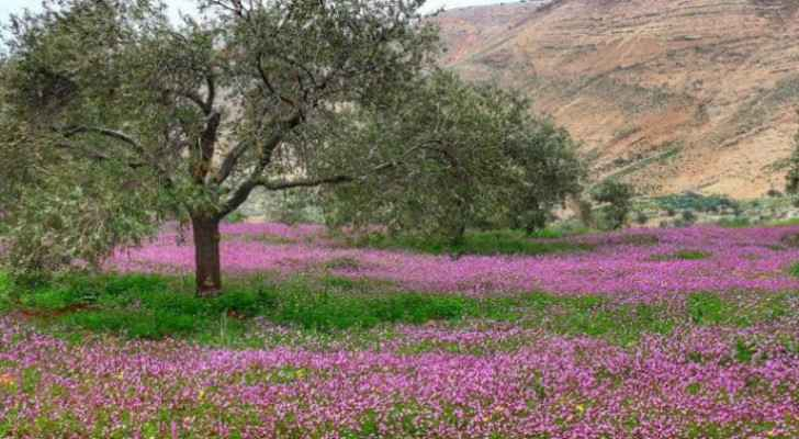 Jordan's weather becomes warmer, temperatures continue rising