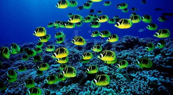 Warming waters causing marine life to move poleward