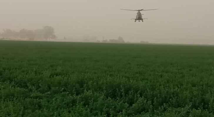 Tafila Agriculture Directorate ready to combat locust swarms: director