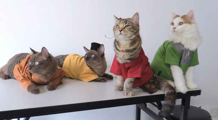 Malaysians dress cats for Eid