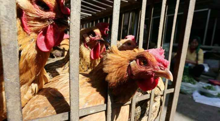 China confirms first human case of H10N3 bird flu