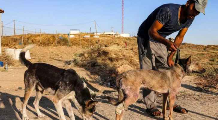Beyond Palestinians, animals pay price for brutality of Israeli Occupation aggression in Gaza