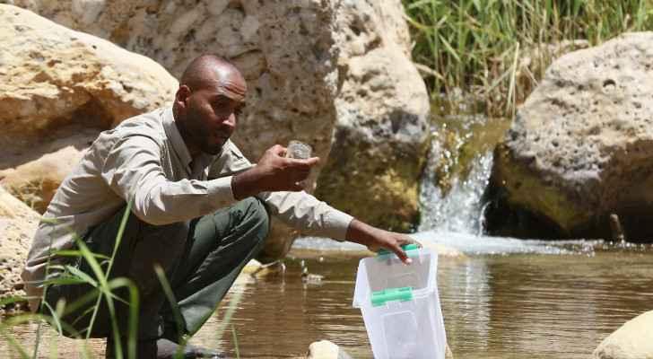 Jordan battles to save rare tiny Dead Sea carp