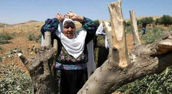 Settlers uproot 84 trees south of Nablus